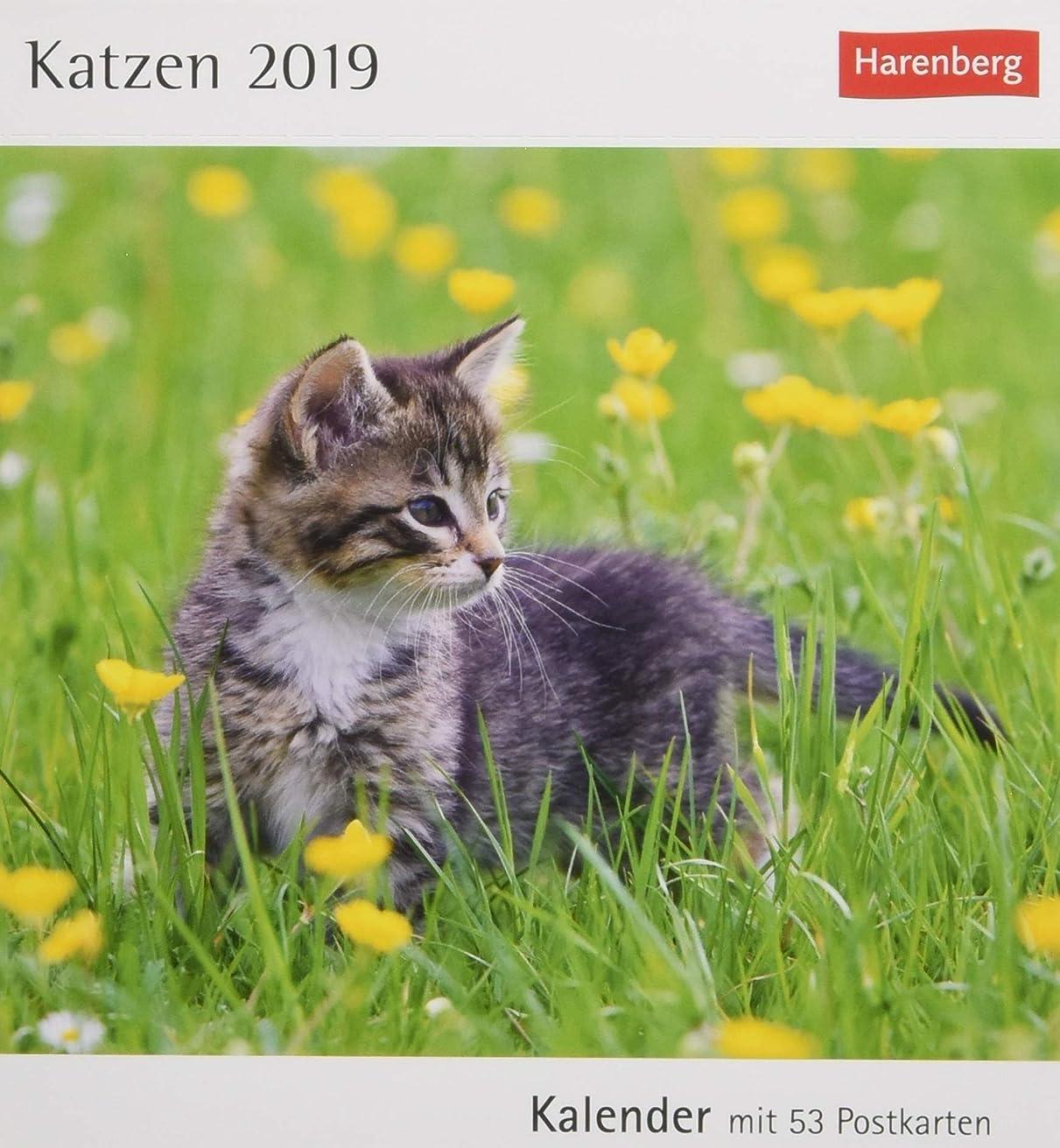 ロイヤリティスパイラル参加者Katzen 2019: Kalender mit 53 Postkarten