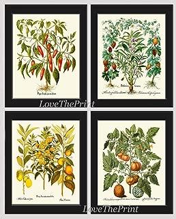 Fruit Vegetable Herb Print Set of 4 Antique Botanical Prints Red Pepper Momordica Garden Balsam Jewelweed Touch-me-not Lemon Orange Citrus Tree Melon Yellow Tomato Home Room Decor Wall Art Unframed