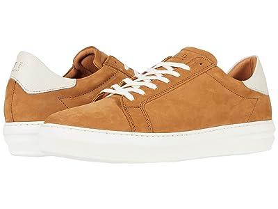 Shoe The Bear Aphex N