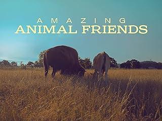 Amazing Animal Friends - Season 1
