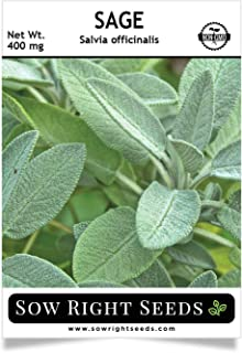 Sow Right Seeds - Sage Seeds for Planting - All Non-GMO Heirloom Sage Seeds with Full Instructions for Easy Planting and Growing Your Kitchen Herb Garden, Indoor or Outdoor; Great Gift