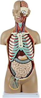 Axis Scientific 18-Part PREMIUM Unisex Human Torso Model | Detailed Life-Size Human Body Model has 18 Removable Human Organs | Includes Detailed Product Manual | 3 Year Warranty