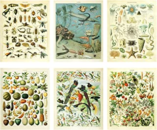 Meishe Art Vintage Poster Print Biology Botanical Science Fruit Flowers Blooming Floral Wall Decor Fishes Deep Sea Creature Animals Vegetables Insects Birds Breeds Species Identification Set of 6pcs