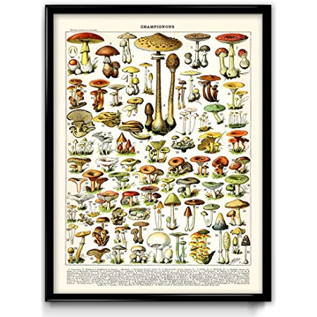Last minute gift for hostess Farmhouse decor rustic country wall art Large digital download mushroom art Printable vintage kitchen decor