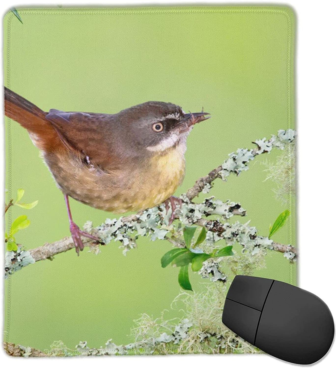 The Bird is Surprise price On Branch Non-Slip for Base Rubber Used Max 70% OFF Computer