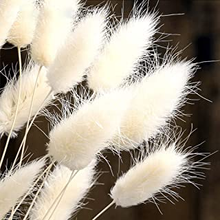 Color Life 110-120 Pcs Dried Natural Flowers Decoration |Pampas Grass, Dried Fox Tail, Rabbit Tail Grass, for Home, Party Themed Decorations ,16in(Off White)