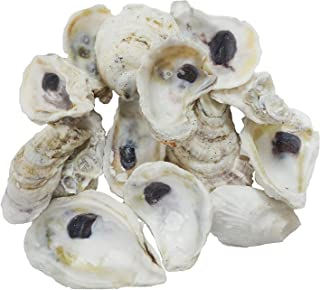 painted oyster shells