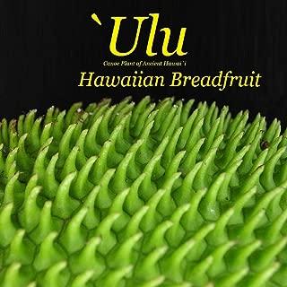 ~ULU~ BREADFRUIT Artocarpus Ancient HAWAIIAN Canoe Plant Live small potted plant