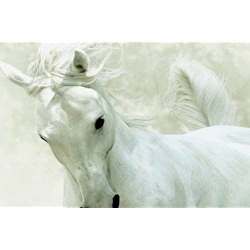 Horse Canvas Print 20*30 Inch HUGE !
