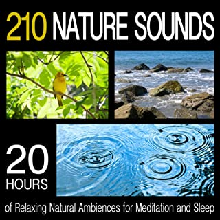 Best nature sounds for work Reviews