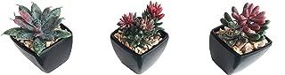 3-Pack Artificial Fake Mini Green Succulent Cactus Plant in Black Square Planter Pot w/Sand Gravel for Terrarium Zen Garden Gift Set