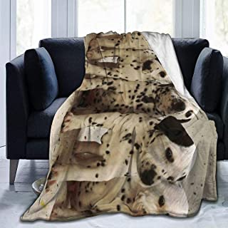 LodiSFOA Dalmatian Puppy Fleece Blanket Throw Lightweight Blanket Super Soft Cozy Bed Warm Blanket for Living Room/Bedroom All Season