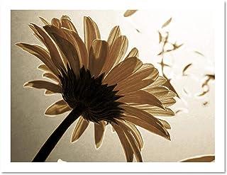 Blomblad Sepia natur stam vind hem stor inramad konst tryck affisch väggdekor 45 x 60 cm
