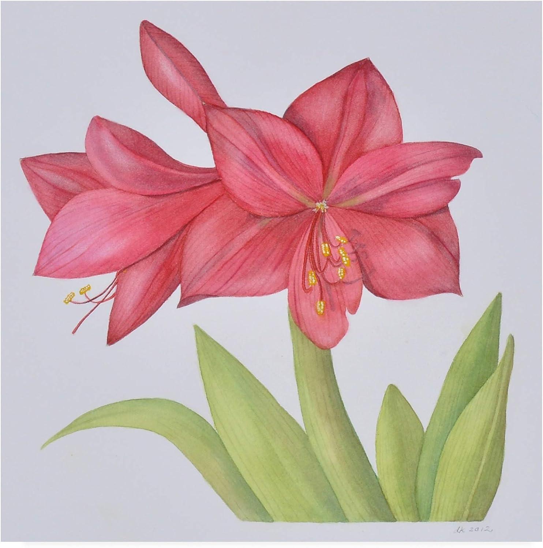 Trademark Fine Art Amaryllis Pink