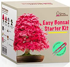 Grow Your own Bonsai kit – Easily Grow 4 Types of Bonsai Trees with Our Complete Beginner Friendly Bonsai Seeds Starter kit – Unique Seed kit Gift idea