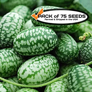 Cucamelon Seeds (75+ Pack) Mexican Sour Gherkin Mini Watermelon Non-GMO Heirloom Seeds by PowerGrow Systems