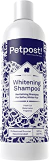 Shampoo For Silver Poodles