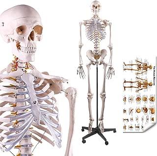 Best plastic human body model Reviews