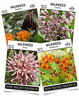 Sow Right Seeds - Milkweed Seed Collection; Varieties Included: Butterfly, Common, Showy, and Bloodflower Milkweed, Attracts Monarch and Other Butterflies to Your Garden; Non-GMO Heirloom Seeds;