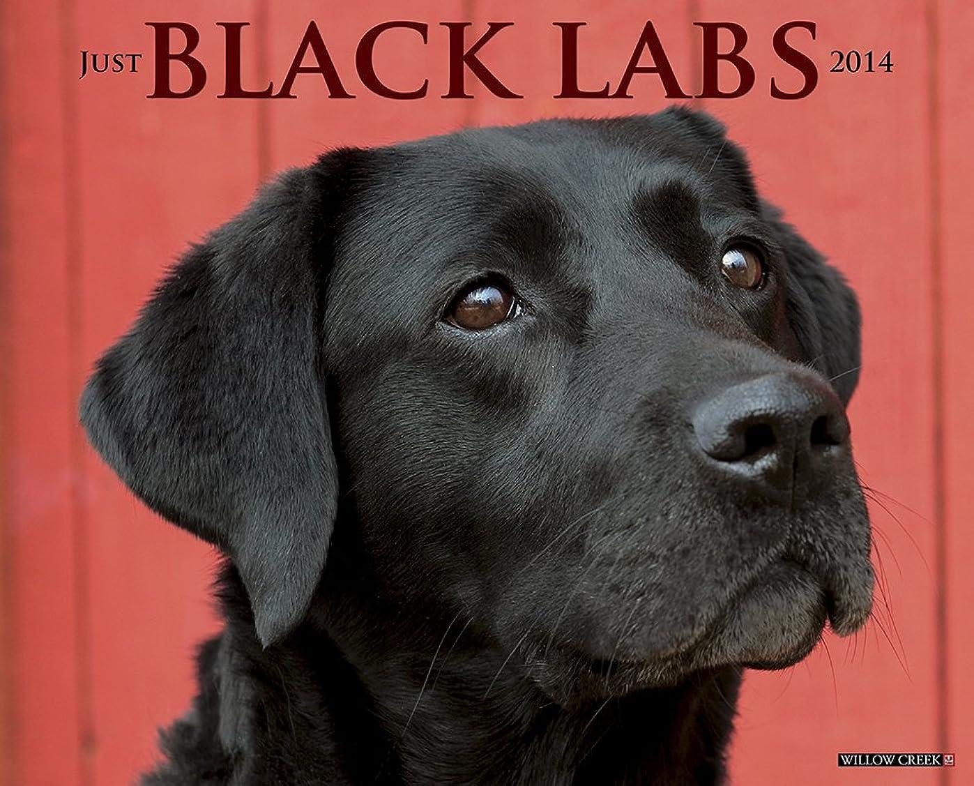 ペルセウスチロストラトフォードオンエイボンJust Black Labs 2014 Calendar