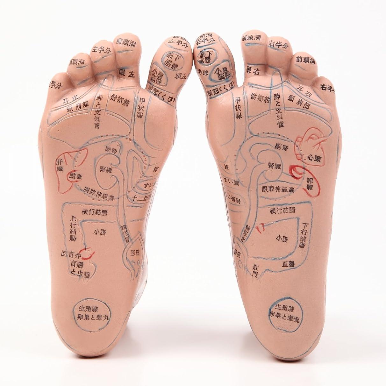 【ps.j】足つぼ模型 日本語表記 20cm マッサージ棒 セット 教材やご家庭でも!