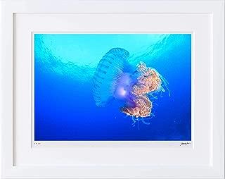 【写真工房アートフォト 額装写真】 美しい色合いのクラゲ/バア環礁/モルディブ(ホワイト 通常サイズ 426mm×336mm)