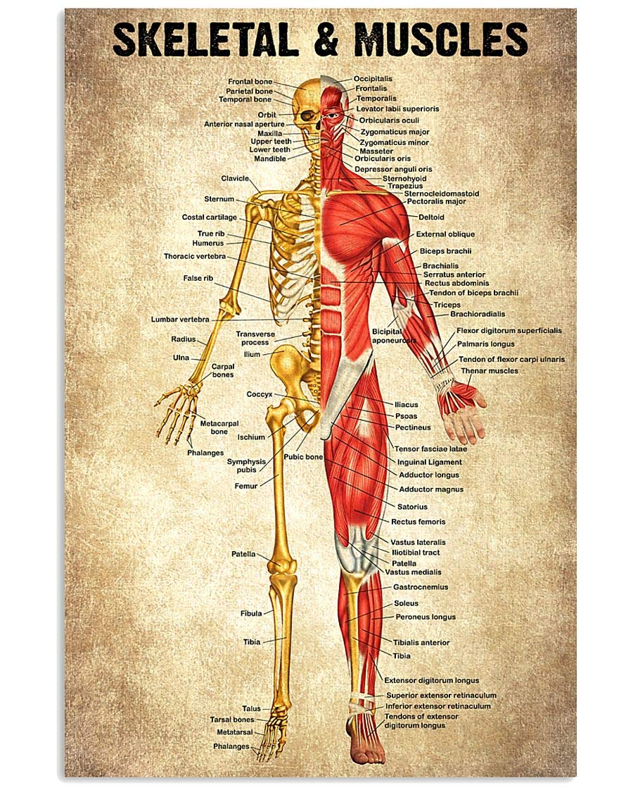 Skeletal And Muscles Canvas Max 40% Popular OFF Print Modern Farmhouse Perfect for