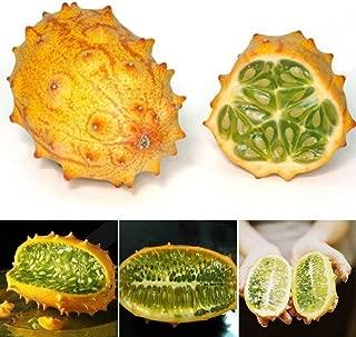 Wintefei 10Pcs Gac Fruit Rare Momordica Cochinchinensis Seeds Exotic Health Garden Plant