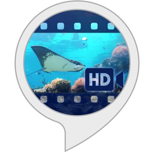Ambient Visuals: Unterwasserwelt