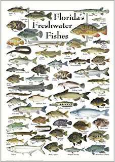 Earth Sky & Water Poster - Florida's Freshwater Fishes
