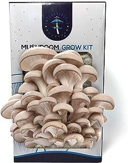 Oyster Mushroom Growing Kit by Intergalactic Mushroom. Grow Edible and Gourmet Mushrooms Indoors. Great Gift.