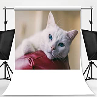 Close up Shot of a Female Turkish Angora cat Relaxing on top of a red Leather Couch Photography Background,030127 for Photo Studio,Pictorial Cloth:6x10ft