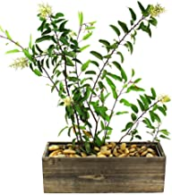 CYS Excel Rustic Planter Box, 15 Sizes Available, Wood Planter, Decorative Box, Succulent and Floral Arrangements, Indoor Use Wood Box with Removable Liner, Wedding DÉCOR H:5