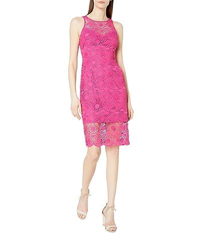 Adrianna Papell Sunrise Lace Illusion Sheath Dress (Bright Azalea) Women