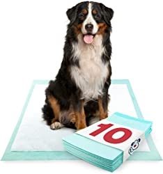 ValuePad Plus Puppy Pads, Extra Large 28x36 Inch, 10 Count - Premium Pee Pads for Dogs, Tear Resistant, Super Absorbent Polymer Gel Core, Leak-Proof 5-Layer Design