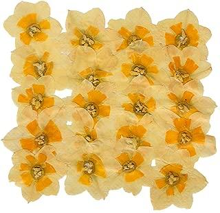 Best pressed flowers uk Reviews