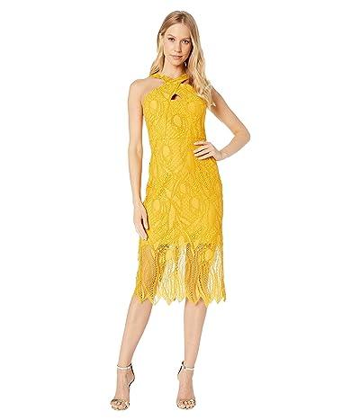 BCBGMAXAZRIA Midi Lace Cocktail Dress (Golden Glow) Women