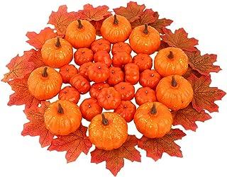 Best mini pumpkin bulk Reviews