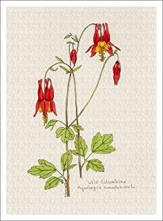 Arthouse Botanical Illustration of Wild Columbine from The Wildflowers Group, Giclee Print, 7 X 9.5 Inches