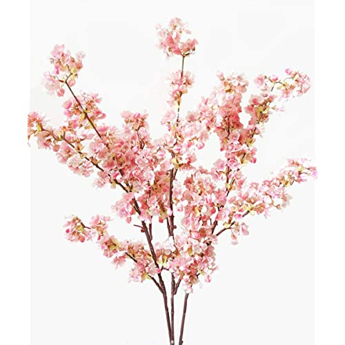 Cherry Blossom Trees Amazon Com