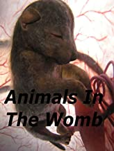 national geographic animals in the womb