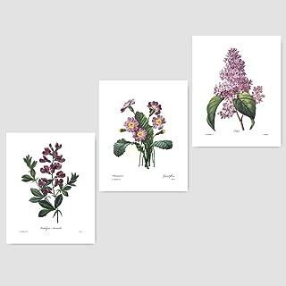 (Set of 3) Botanical Wall Prints (Purple Home Decor, Redoute Room Flower Art) Sweet Pea Lilac Primrose - 8x10 Unframed