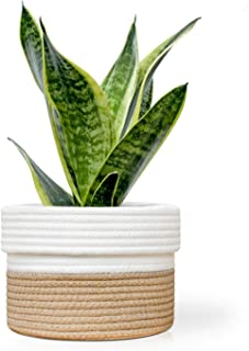 Cotton Rope Plant Basket Cover for 6 Inch Indoor Plant and Flower Pots (Brown and White)