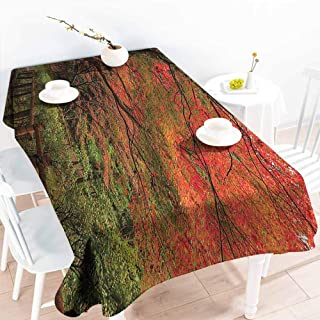 Homrkey Rectangular Tablecloth Japanese Decor Collection Lace Canadian Maple Tree with Faded Autumn Leaves Tranquil Rainy Zen Path Session Photo Red Green Washable Tablecloth W50 xL80
