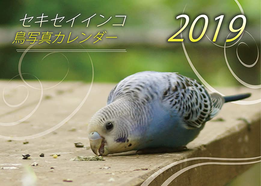 傘慈悲深いセキセイインコ?鳥写真カレンダー 2019 (A5サイズ。ワンタッチで卓上にも壁掛けにもなる3Wayカレンダー)