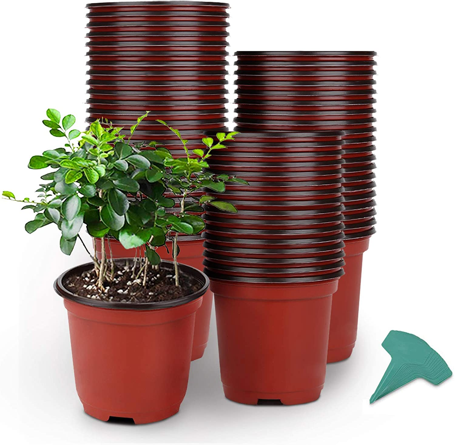 GROWNEER 60 Packs 4 Inches Plastic Limited time trial price Plant Large-scale sale Pc Nursery 15 Pots with