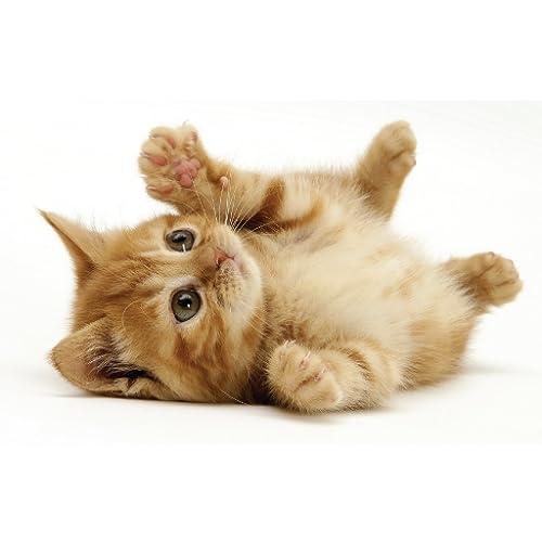 Cute Kat Sounds