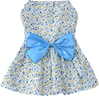 Best cute dressed dogs Reviews