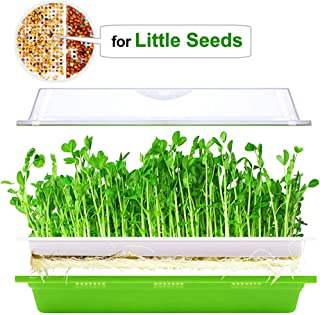 Seed Sprouter Tray with Lid BPA Free Plastic Extra Small Holes for Little Seeds Sprouts Bean Grower Sprouting Kit 13x10.2x3.5in(LxWxH)