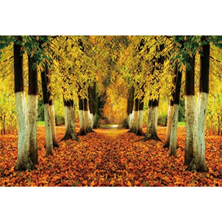 Nature 10x12 FT Photo Backdrops,Autumn Fall Season Trees Falls Dried Leaves Scenery on Road Path Photo Artwork Background for Photography Kids Adult Photo Booth Video Shoot Vinyl Studio Props